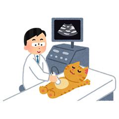 2.画像診断(レントゲン検査・エコー検査など)