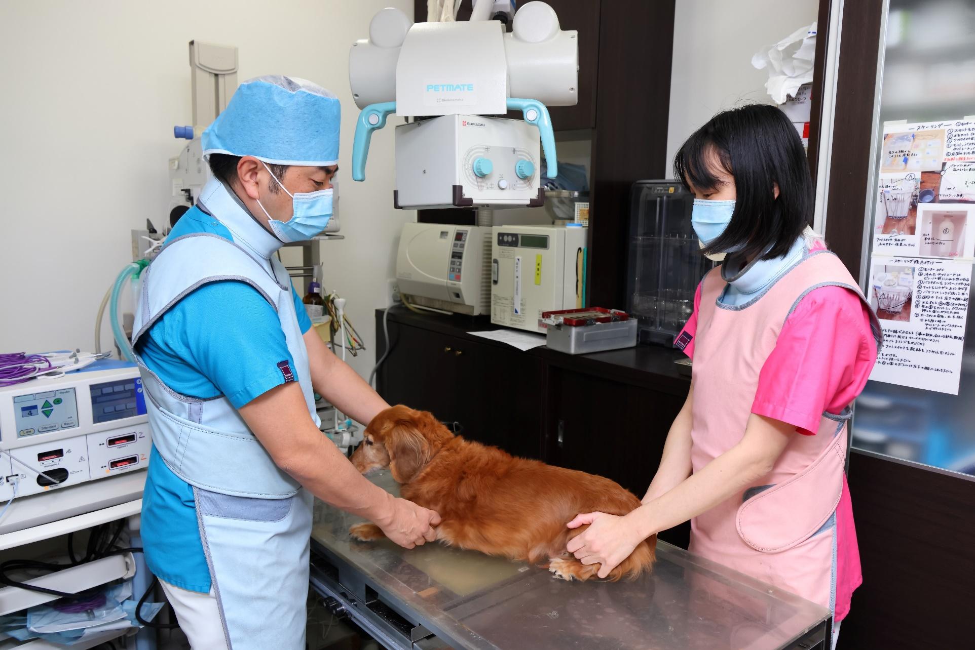 当院で行っている動物への負担を減らす方法 イメージ写真1